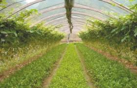 农业农村部部署今年春耕备耕工作深入推进种植结构调整