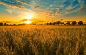 2019年中央财政农业生产发展资金项目实施方案
