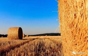 国务院发文促进乡村产业振兴